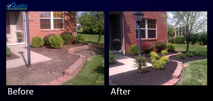 Installed New Clematis, Spirea, Japanese Maple, Birdsnest Spruce and Mulch
