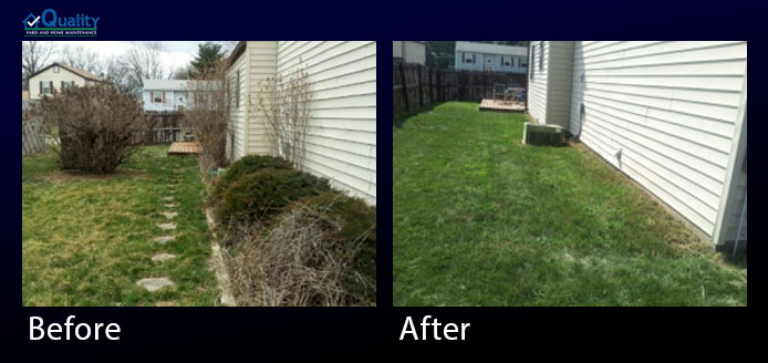 Before and After Landscaping - Tore Out Bushes, Stones and Seeded